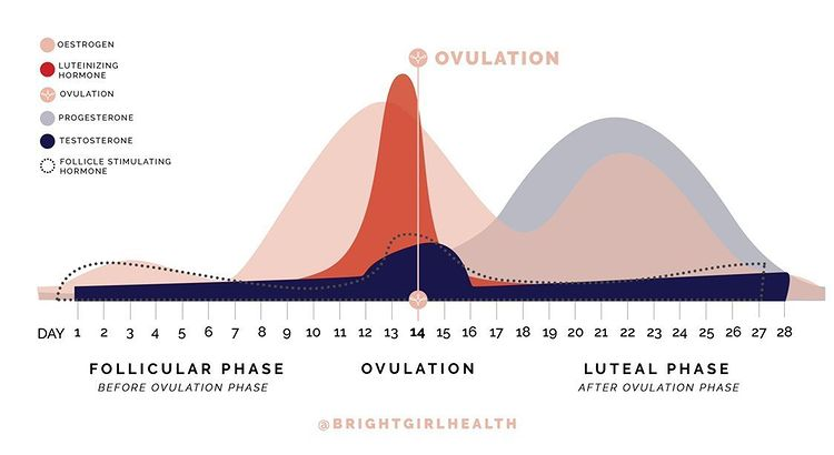 Ovulating Regularly With PCOS